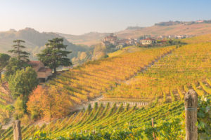 Italy, Piedmont, Cuneo District, Barolo, Langhe Barolo at sunris